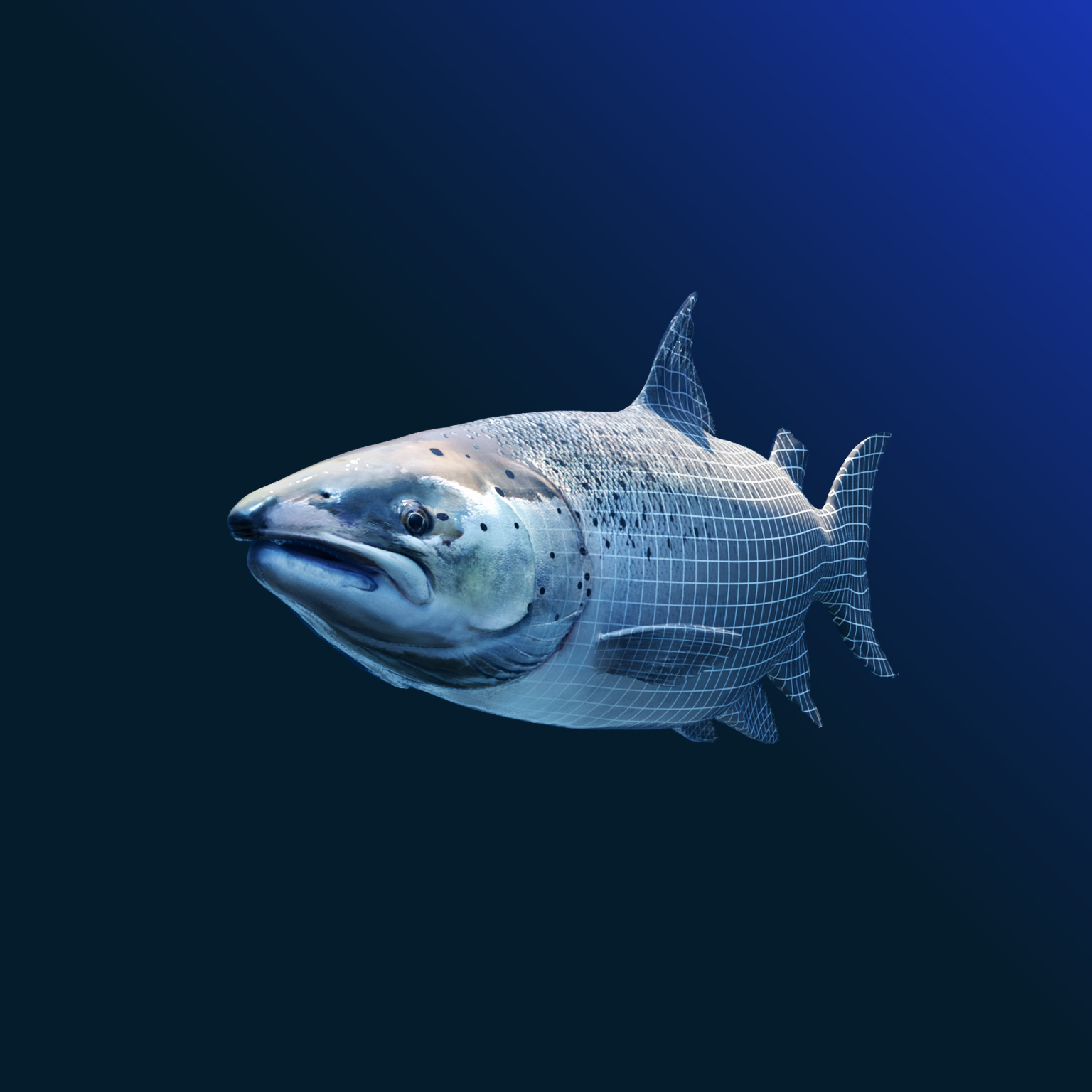 mckinsey-for-kids:-hungry-fish,-baffled-farmers,-and-what-happened-next