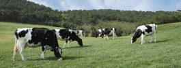 What US dairy executives learned from the pandemic